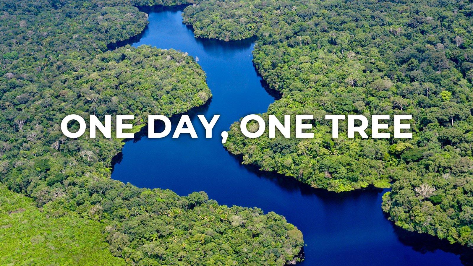 One Day, One Tree | Innokin