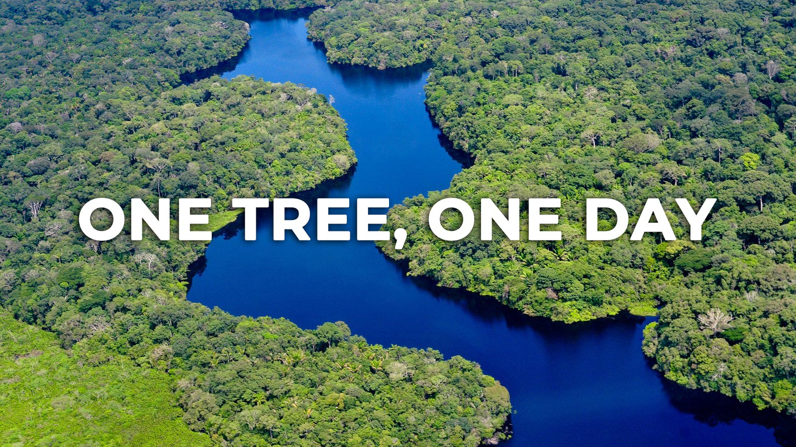 Innokin Partners With One Tree Planted: OneDay, One Tree